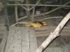 zoo-zlatar-bistrica (10)