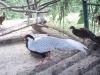 zoo-zlatar-bistrica (50)