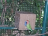 zoo-zlatar-bistrica (53)