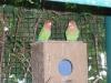 zoo-zlatar-bistrica (56)