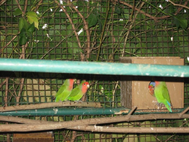 zoo-zlatar-bistrica (4)