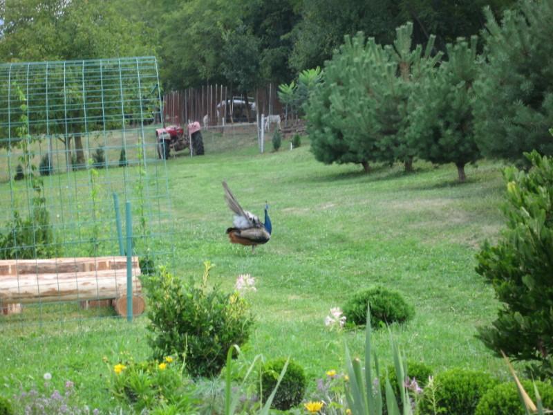 zoo-zlatar-bistrica (6)