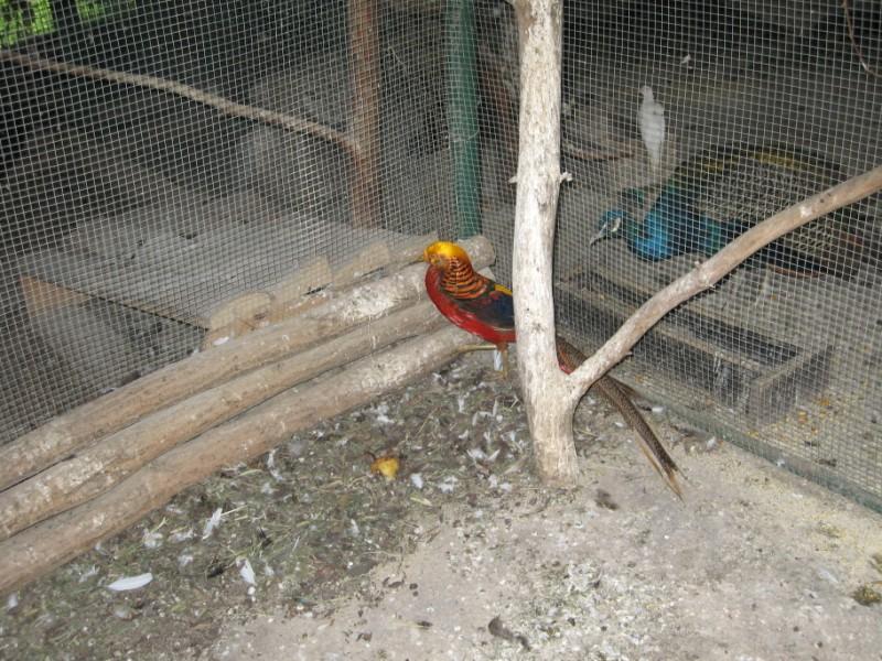 zoo-zlatar-bistrica (8)