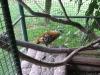 zoo-zlatar-bistrica (2)
