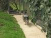 zoo-zlatar-bistrica (20)