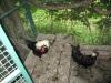 zoo-zlatar-bistrica (3)