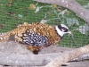 zoo-zlatar-bistrica (49)