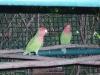 zoo-zlatar-bistrica (55)