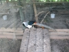 zoo-zlatar-bistrica (9)