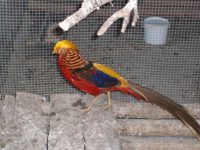 zoo-zlatar-bistrica (60)